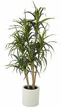 Künstliche grüne Drachenbaum-Pflanze im weißen