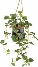 Künstliche Grünpflanze und Hängetopf aus Glas