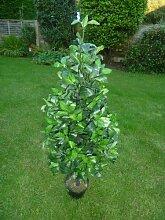 Künstliche Pflanzen–3ft Künstlicher Bay baum in einem Topf Pyramide Form–0,9m innen-Pflanze, Büro Pflanze oder Haus Pflanze