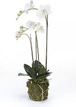 künstliche Phalaenopsis, Orchideen Pflanze mit Wurzeln, weiß, H.70 cm, Emerald (45,95 EUR / Stück)