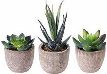 Künstliche Sukkulenten Pflanzen Gefälschte