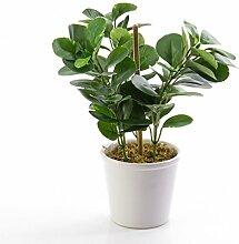 Künstliche Zwergpfeffer Pflanze mit 72 Blättern, grün, getopft, 30 cm - Künstliche Pflanze / Deko Pflanze - artplants