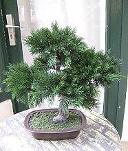 Künstlicher Bonsai- Pinus in Schale ca. 50cm