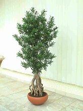 künstlicher Bonsai Podocarpus 170cm