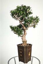 Künstlicher Bonsai Podocarpus im Topf, 320