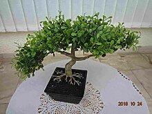 künstlicher Bonsai Teeblatt 25cm.hoch 35cm brei