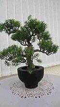 künstlicher Bonsai Zeder x 5- 33 cm.hoch