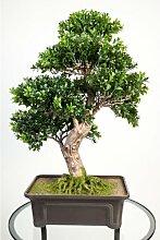 Künstlicher Buchs Bonsai in Schale, 550 Blätter,