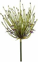 Künstlicher Zierlauch CHARLEEN mit violetten Blüten, 100 cm - Kunst Allium / Blüten Zweig Deko - artplants