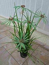 künstlicher Zyperngras- Busch ca.85cm