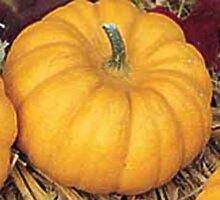 Kürbis/Zierkürbis Mandarin Samen