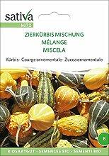 Kürbis Zierkürbis Mischung | Bio-Kürbissamen
