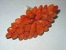 Kürbiskerne orange - Spange aus Samen,