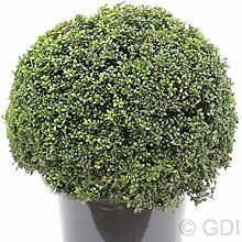 Kugelschnitt Löffel Ilex Dark Green 25-30cm -