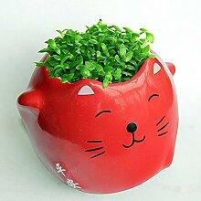 Kungfu Mall DIY Glückliche Katze Vase Mini Kitty Pflanzen Blumentopf Desktop Office Decor Topf Lucky Cat Bonsai