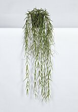 Kunstblume Hoya Linearis im Topf Die Saisontruhe