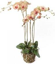 Kunstblume, künstliche Phalaenopsis Orchideen Pflanze creme pink H. 90cm Emerald (79,95 EUR / Stück)