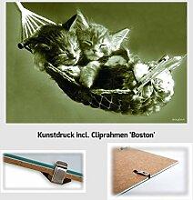 Kunstdruck Poster - Kätzchen Katzen in Hängematte Cats Tiere 61 x 91,50 cm mit Cliprahmen Boston