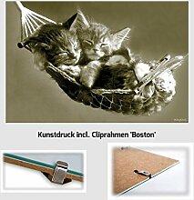 Kunstdruck Poster - Kätzchen Katzen in Hängematte Cats Tiere 61 x 91,50 cm mit rahmenlosem Bildträger Boston & Acrylglas