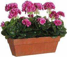 Kunstgeranie im Topf Die Saisontruhe Blütenfarbe: