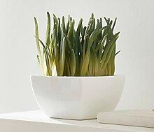 "Kunstpflanze ""Bergeranthus"", 20 cm hohe"