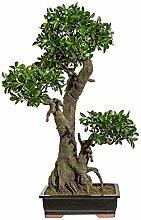 Kunstpflanze Bonsai Ficus grün, in