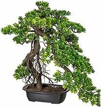 Kunstpflanze Bonsai Podocarpus grün, in schwarzer