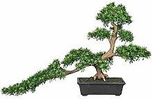 Kunstpflanze Bonsai Podocarpus Han-kengai, in