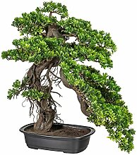 Kunstpflanze Bonsai Podocarpus in schwarzer