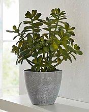"Kunstpflanze ""Crassula Ovat"", 40 cm hoher"
