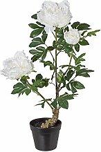 Kunstpflanze Peonie, Farbe weiß, im Kunststoff-Topf, Höhe ca. 70 cm