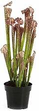 Kunstpflanze Sarracenia MADISON, fleischfressende
