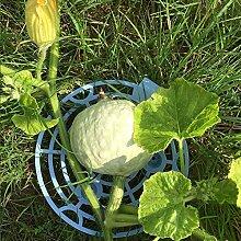 æ— Kunststoff-Melonenstütze, 8 Stück, für