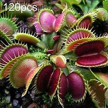 lamta1k 60/120 Dionaea Muscipula Samen,Stücke