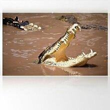 LanaKK - Krokodil - Fototapete Poster-Tapete -