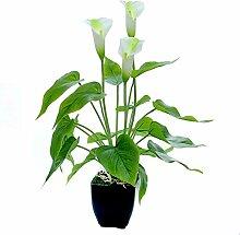 LANGM Künstliche Pflanze, Calla Lily Künstliche