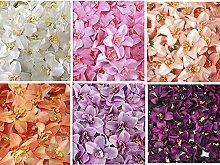 Lanlan Glamorous 318cm Kunstblumen, Cymbidium Orchidee, Blume für Jäten Party Home U besten Preis Geschenk Reis Weiß 100Stück
