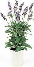 Lavendel im Keramiktopf, hellviolett, 45cm - Kunstblume