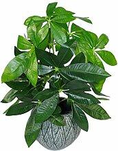 Leaf Realistische Künstliche Geld-Baum Pflanzen in Schwarzem Kunststoff-Topf, 50cm Money Tree Pflanze