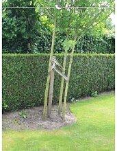 Lebensbaum Thuja plicata Martin 80-100 cm, 35x Heckenpflanze, inkl. Versand