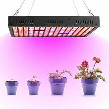 LED-Pflanzenlampe mit 1200 W und großem