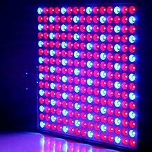 LED Wachsen Licht 14W Rot Blau Vollspektrum LED Pflanze Wachsen Licht Hydroponics Blumensamen Indoor