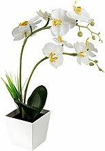 LEDMOMO 9Hessdalen-Orchidee LED-Licht
