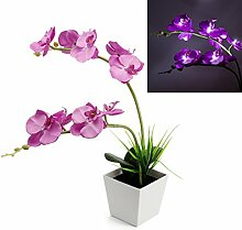 ledmomo 9Hessdalen-Orchidee LED-schaltet die