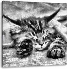 LeinwandbildBaby-Katze, rote Bettdecke East