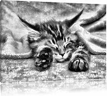 Leinwandbild Baby-Katze, rote Bettdecke in