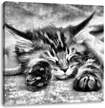 LeinwandbildBaby-Katze, rote Bettdecke
