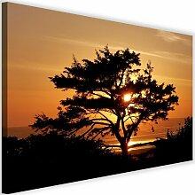 Leinwandbild Baum am Meer bei Sonnenuntergang