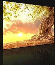 Leinwandbild Baum mit Wurzeln bei Sonnenuntergang