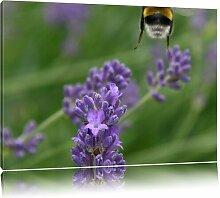 Leinwandbild Biene auf kriechender Günsel East